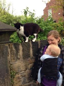 Cat spotting
